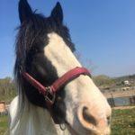 Horses Wishlist